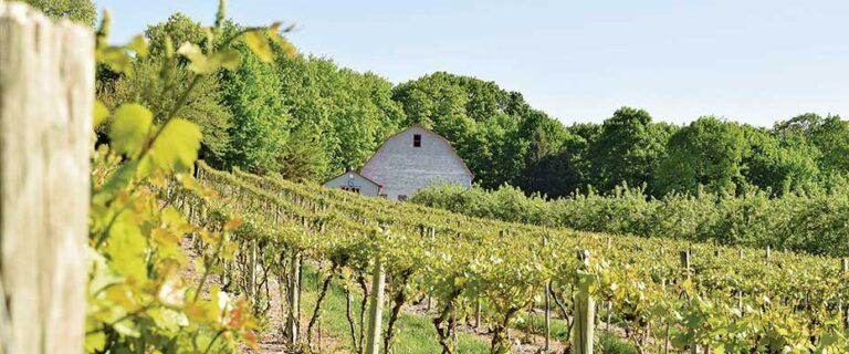 view of Glorie Farm vineyard with barn in background