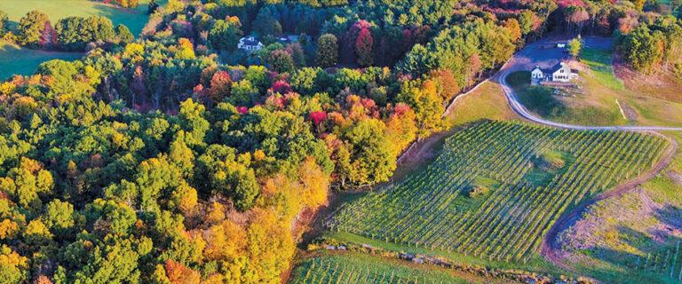 aerial view of milea estate vineyard