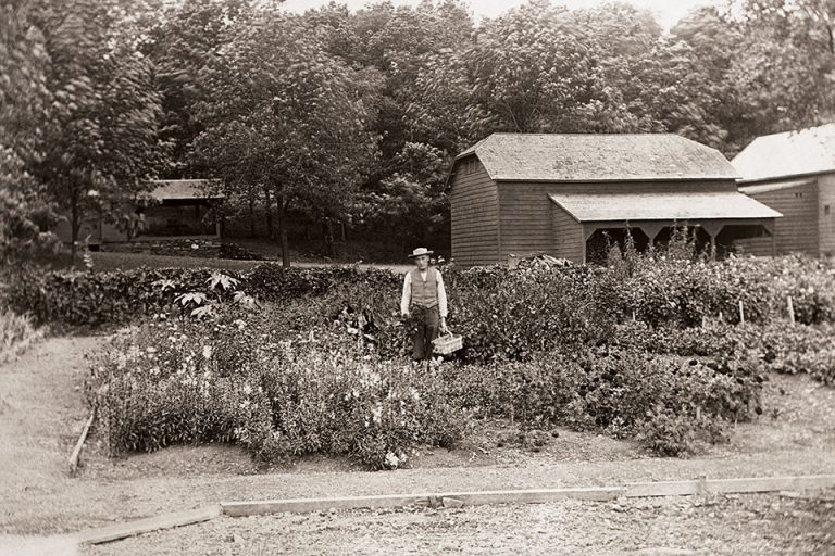 Black and white photo of Gardener Charles Frier with basket, in the kitchen garden at Olana, 1906.