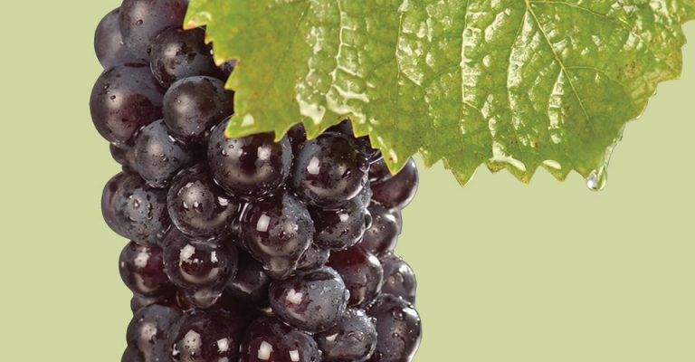 An image of Pinot Noir grapes