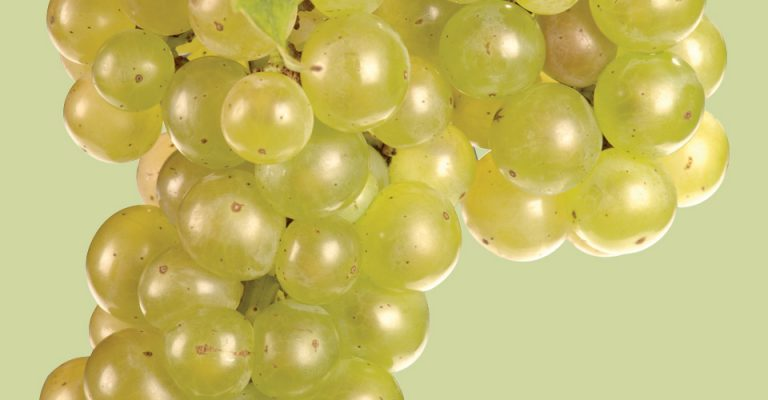 An image of Vignoles Grapes