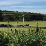 Landscape of Whitecliff Vineyard