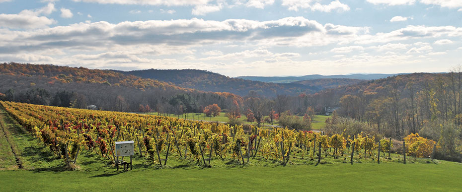 Landscape of Millbrook Vineyard