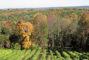 View of the vineyards at Clearview Vineyard, with fall foliage.