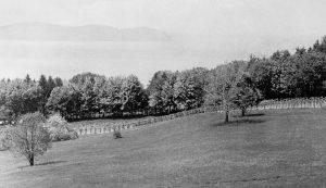 black & white view of vineryard at Lyndhurst, circa 1870s