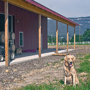Photo of building and dog at Whitecliff Vineyard.