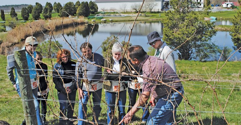 View of instructor pointing out the art of pruning to a group of people, at Millbrook Vineyard & Winery