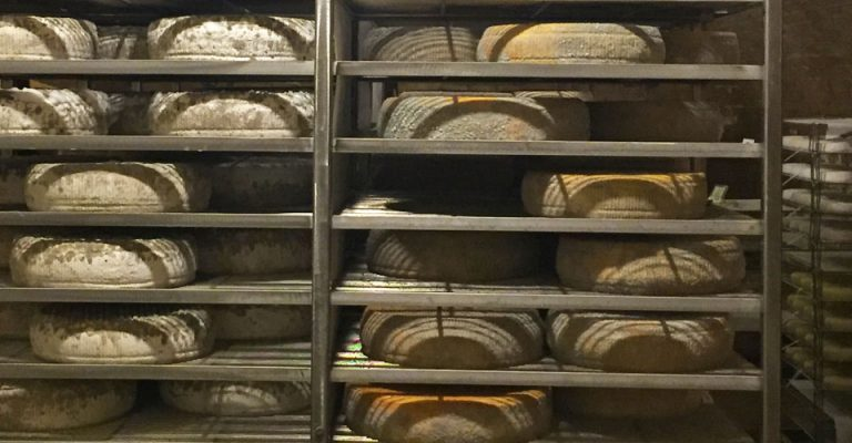unfinished cheese rounds on rack in a creamery