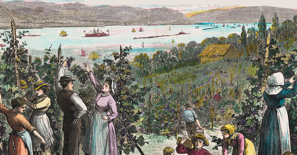 vintage etching of grape picking on the Hudson River