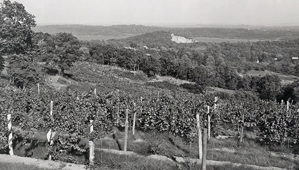 black and white vintage view of vinyards
