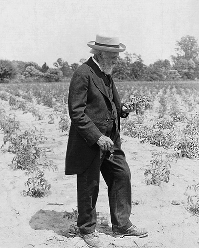 vintage photograph of Stephen Underhill on farm holding plant