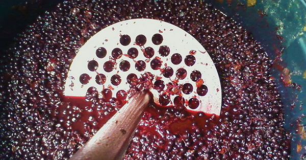 mashing grapes in fermenting tank