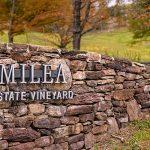 Curved rock wall with Milea Estate Vineyard logo in metal