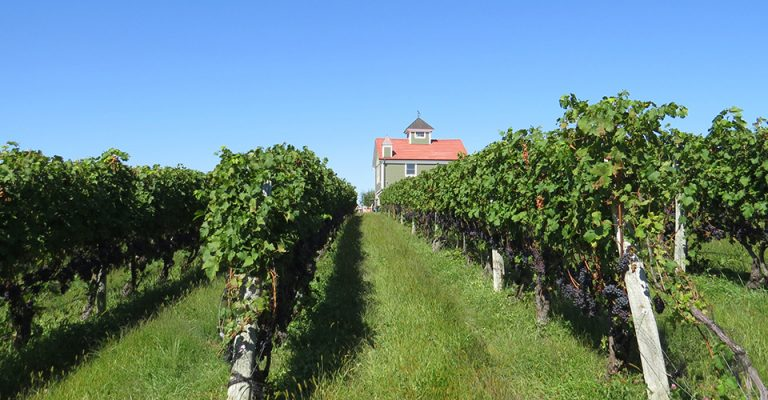 view of red roofed building with vineyard in front