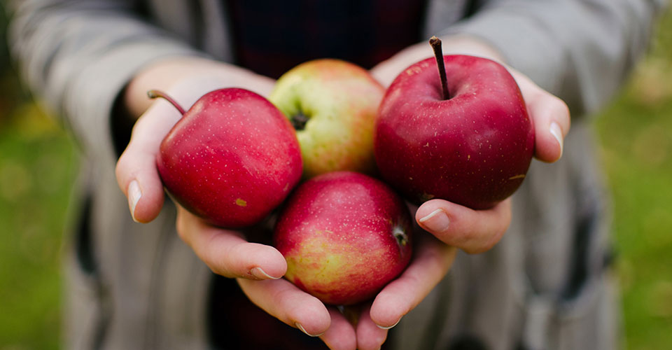 two hands clasped together holding four red apples