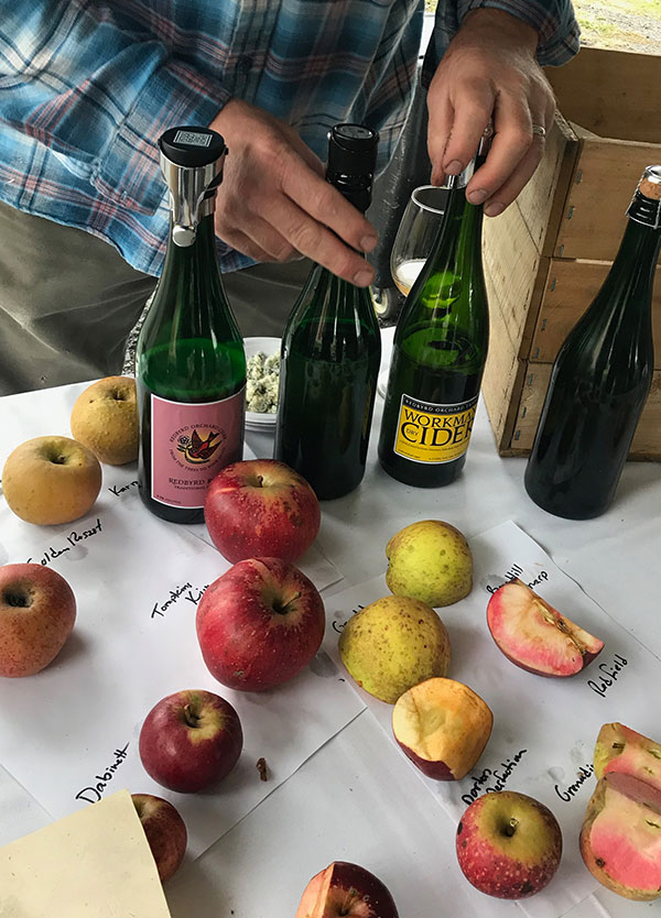 table with bottles of cider and different species of apples on white paper