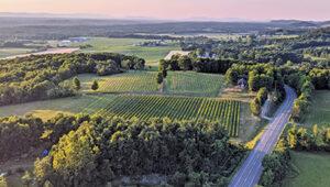 drone view of vineyard